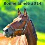 Bonne année 2014 © jumpinews.comIMG_4227 2